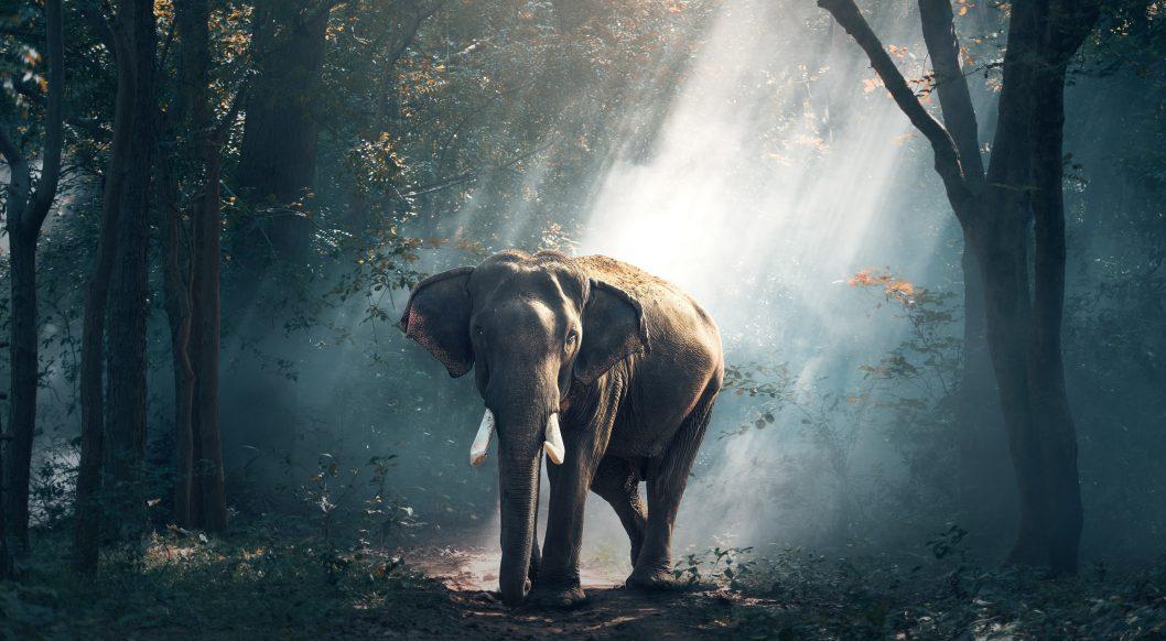 free elephant